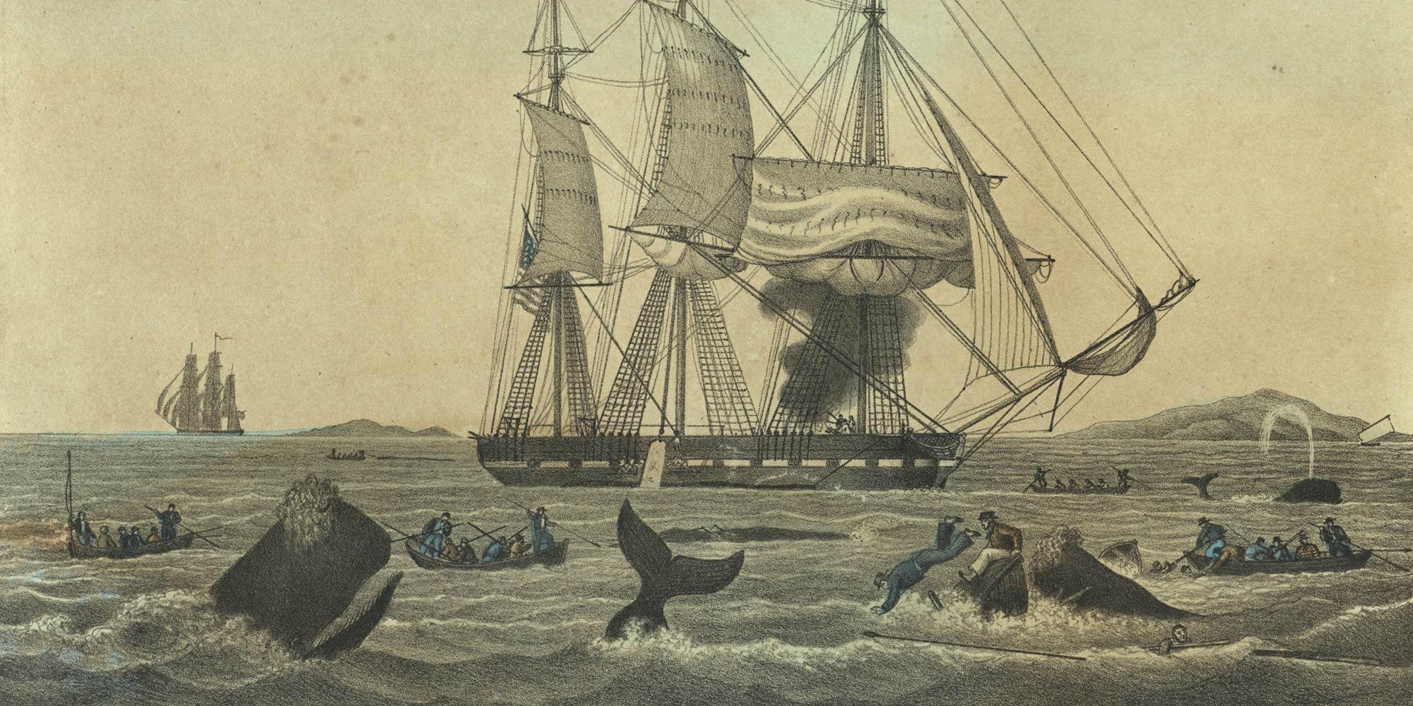 Whaling thumbnail