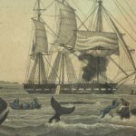 PPL Whaling Collection
