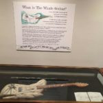 The Whale Guitar in an exhibition case.